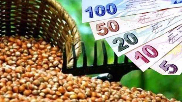 Fındık üreticilerine müjdeli haber:Destek paraları ödeniyor