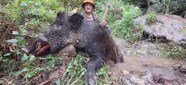 Ordu'da dev yaban domuzu vuruldu
