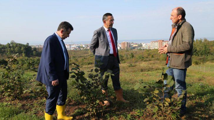 Ordu Üniversitesi Rektörü Akdoğan, Arazilerde İncelemelerde Bulundu