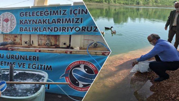 GAGA GÖLÜ'NE 25.000 ADET SAZAN YAVRUSU BIRAKILDI
