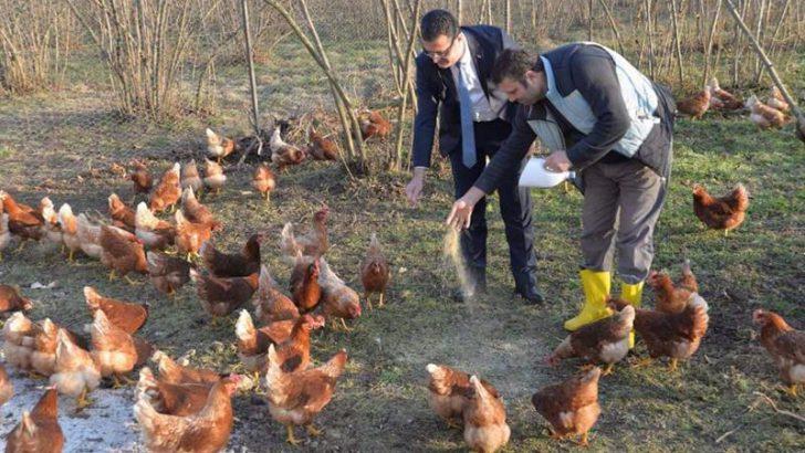 Ordu'da Yumurta Üretimi Artıyor