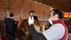 Hayvan Hastalıkları İle Etkin Mücadele Edildi