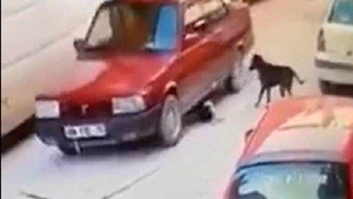 Kumru'da Yavru Köpeğe Çarpan Kişiye Ceza